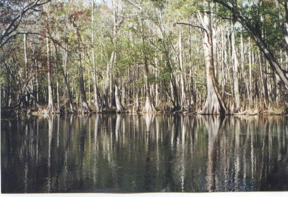 cypressswamp.jpg
